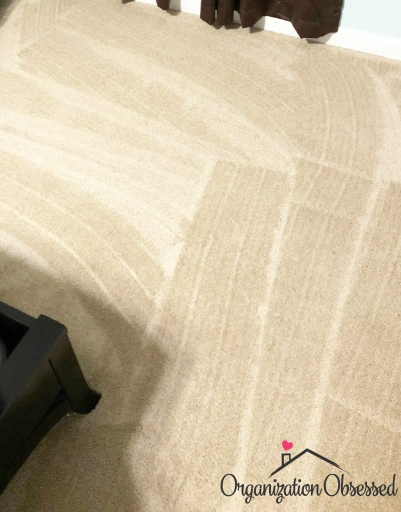 The Vacuum That Saved My Carpet